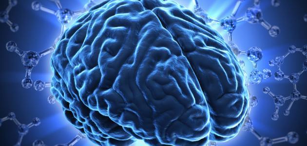 صحة الدماغ وأثر تعلم لغة ثانية