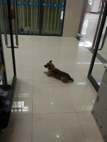 كلب ينتظر صاحبه المتوفي